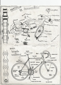 bike anatomy