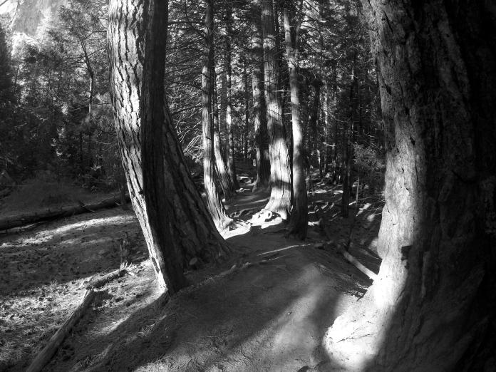tree-path-blk