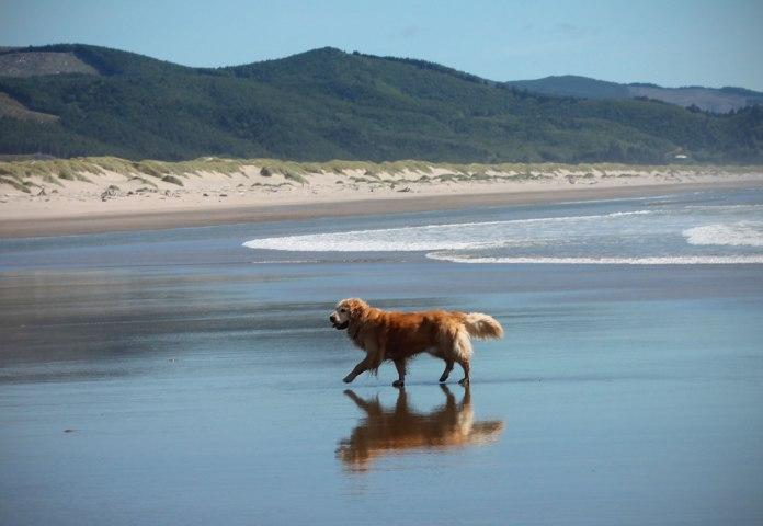 clark-beach