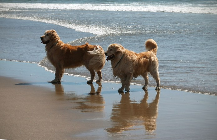 pups-at-beach