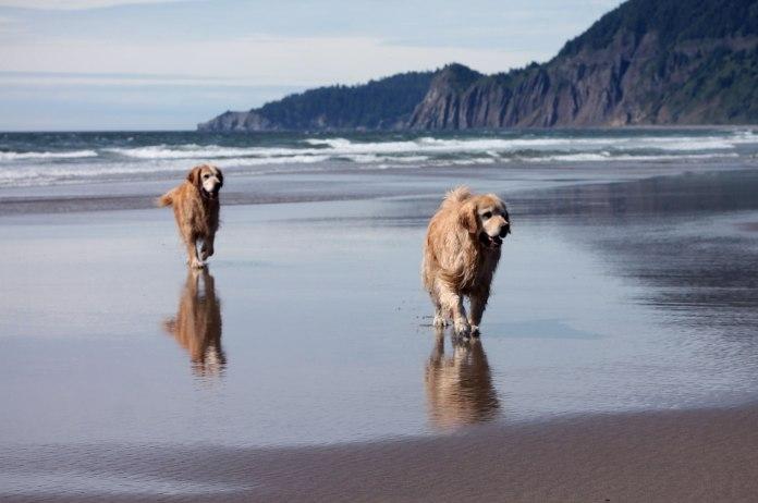 pups-beach